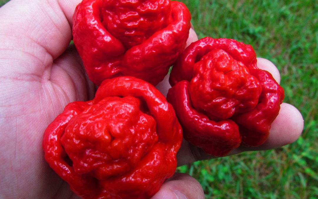 Some Like it Hot –  Hot Peppers That Is!