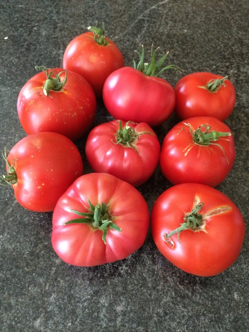 Tomatoes – A Marriage of Two Heirlooms